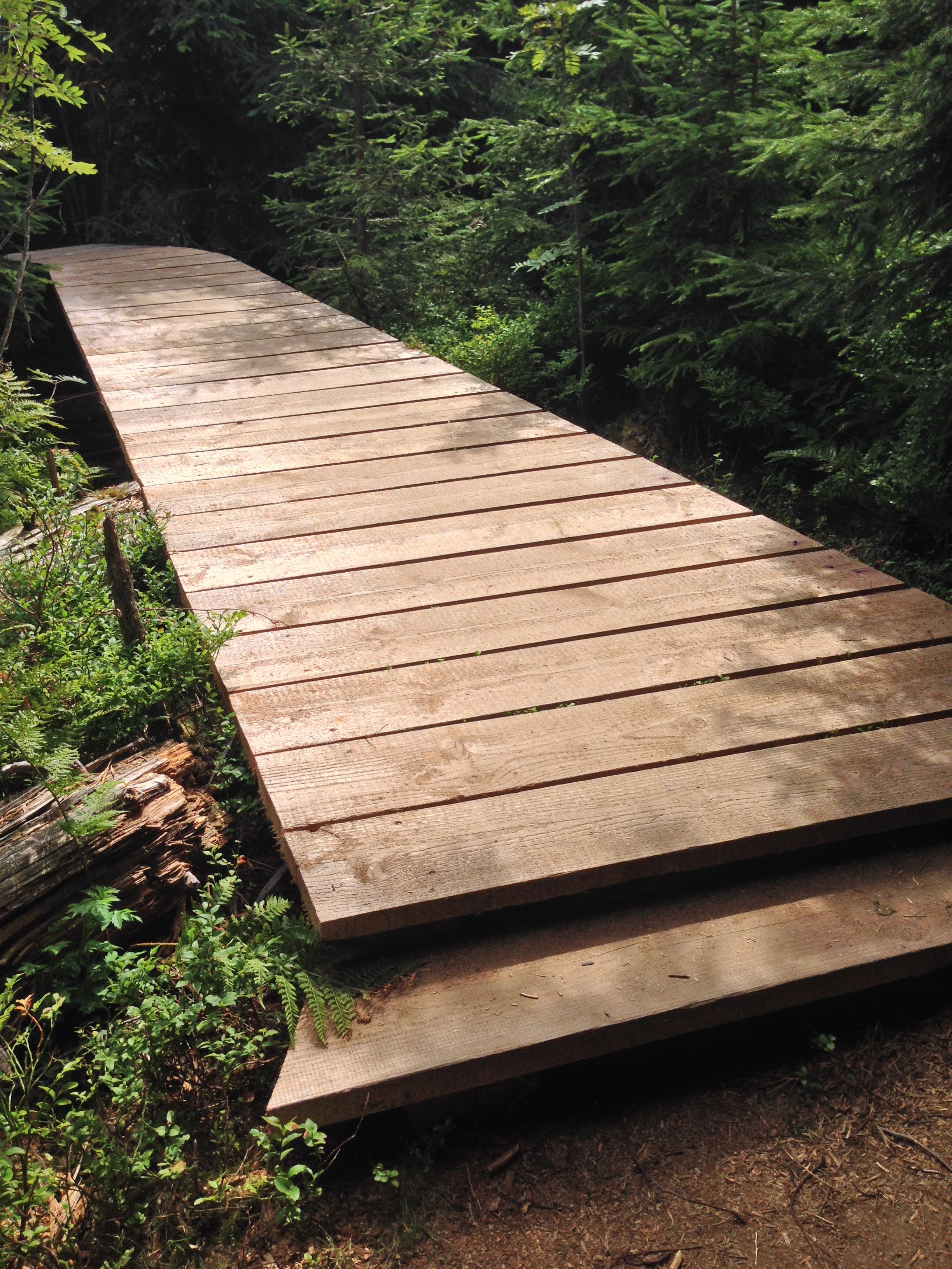 bridge at lotharpfad, black forest